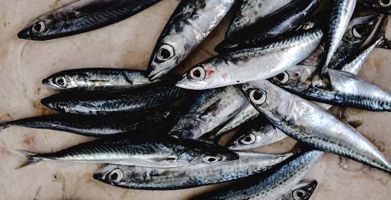 anchos cantabrico barrio salamanca